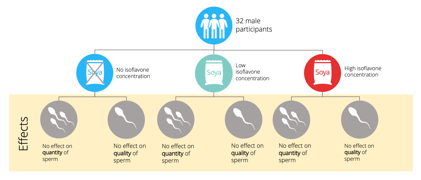 Illustration of the clinical trial that shows no effect of isoflavone supplementation on sperm quantity and quality.