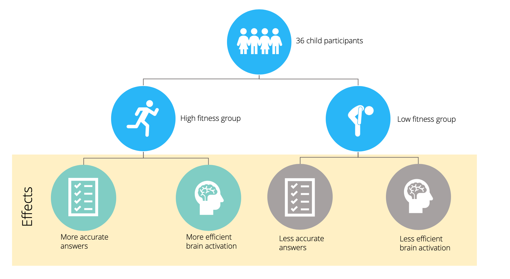 Infographic of study demonstrating the association of aerobic fitness on cognitive functionality in children.